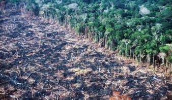Egyetlen év alatt két Portugáliányi erdőt pusztítottunk ki