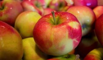 Az óvodások is kapnak ezentúl friss gyümölcsöt