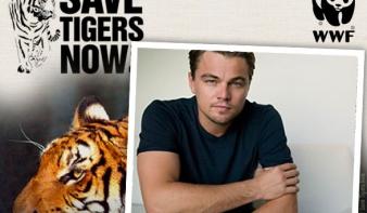 Leonardo DiCaprio alapítványa 15 millió dollárt ajánlott fel a környezetvédelem támogatására