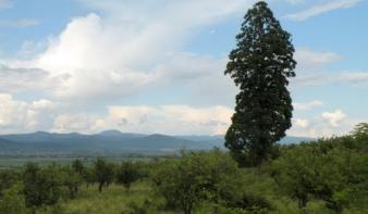 Megnőtt Máramarosban a mezei lopások száma