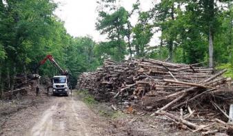 Módosult az erdészeti törvény: a falopás minden esetben bűncselekmény