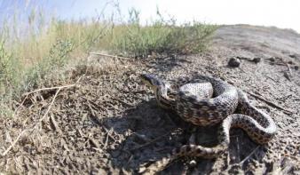 Új állatfajokat fedeztek fel Tibetben