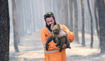 Egymilliárd nagyobb állat pusztulhatott el az ausztráliai tüzekben