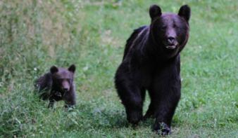 Horgászás közben ölte meg a medve az egyik Maros megyei község jegyzőjét