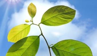 Növények sem kellenek már a fotoszintézishez