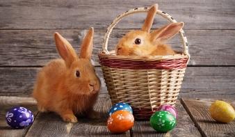 Miért a nyuszi hozza a húsvéti tojást?