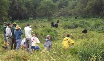 Gorillák mentenek meg számos ruandai közösséget